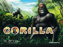 Игровой автомат Gorilla от Вулкана 24