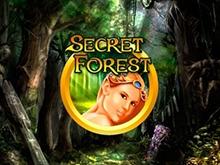 Secret Forest в игровом клубе