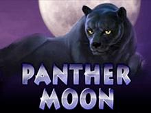 Демо на деньги Panther Moon в автоматах Вулкана